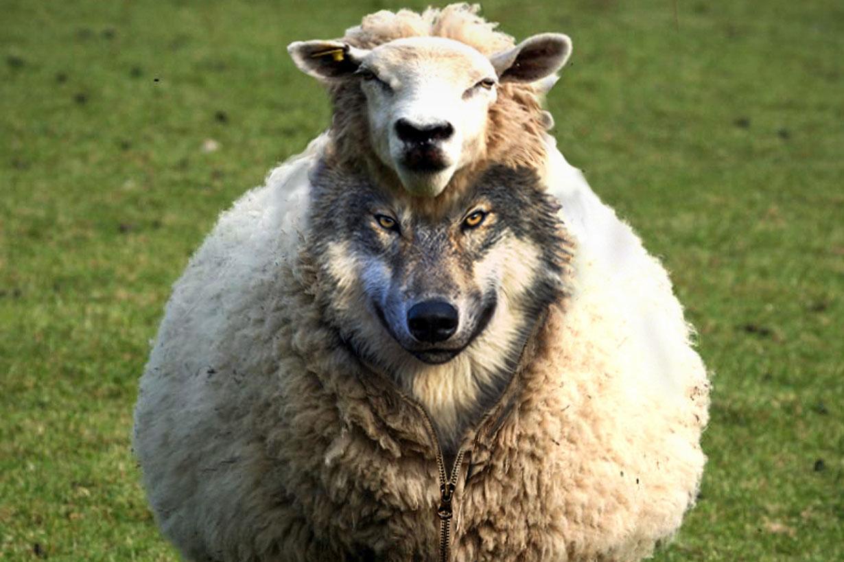 понедельника картинки волки овечка тоже